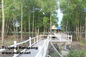 Monkey Habitat @ Tanjung Ketapang