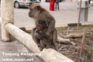 到丹绒看猴子