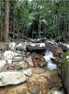 Gunung Ledang aims for more visitors