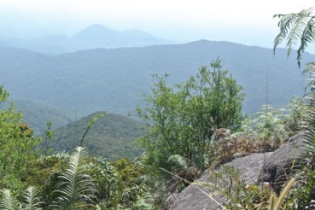 Gunung Ledang expedition :: This one's for you, Dad