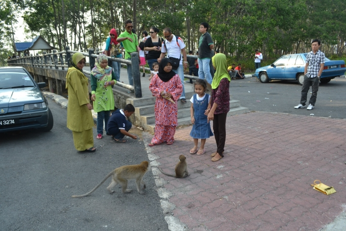 麻丹绒哥打邦公园 猴群绝跡利多于弊 [Monkeys disappear from Tanjung Ketapang]
